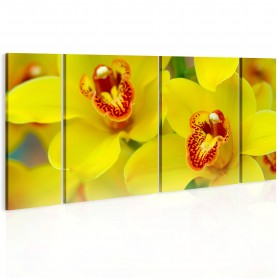 Tavla - Orchids - intensity of yellow color