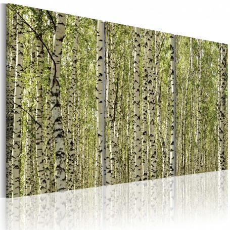 Tavla - A forest of birch trees