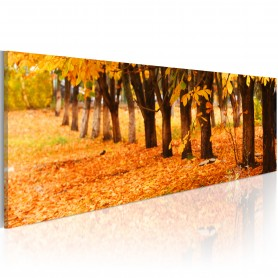 Tavla - Park covered with golden leaves