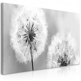 Tavla - Fluffy Dandelions (1 Part) Grey Wide